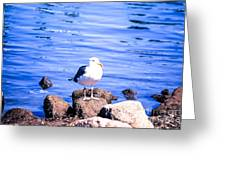 Bird Of The Rocks Greeting Card