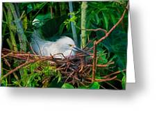 Bird On A Nest Greeting Card