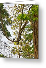 Bird On A Vine In Jungle Forest In Chitwan Np-nepal  Greeting Card