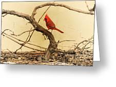 Bird On A Vine Greeting Card