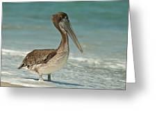Bird On The Beach Greeting Card
