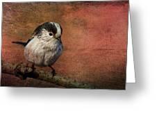Bird On The Beam Greeting Card