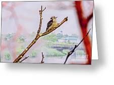 Bird On The Brunch Greeting Card