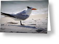 Bird On The Shoreline Greeting Card