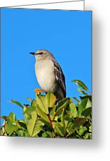 Bird On Tree Top Greeting Card