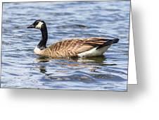 Bird Profile Greeting Card
