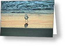 Bird Reflection Greeting Card