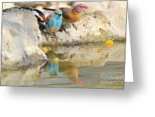 Bird Reflection Of Beauty Greeting Card