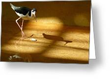 Bird Reflections Greeting Card