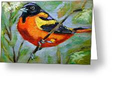 Bird Series Oriole Greeting Card