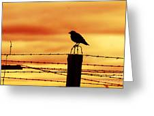 Bird Sitting On Prison Fence Greeting Card