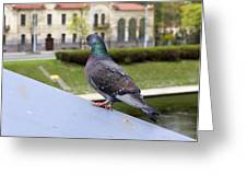 Bird  Spoil On  Roof Greeting Card
