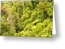 Bird View Of Lush Green Sub-tropical Nz Rainforest Greeting Card