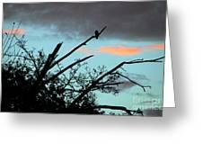 Bird Watching Sunrise Greeting Card