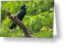 Bird With Blue Eyes Greeting Card