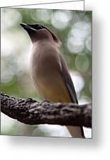 Bird With Bokeh Greeting Card