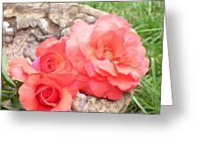 Birdbath Roses Greeting Card