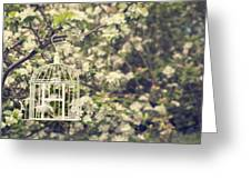 Birdcage In Blossom Greeting Card