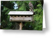 Birdhouse Takeover  Greeting Card
