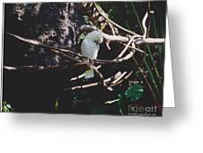 Birdie Sitting In The Tree Greeting Card