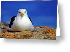 Birds 10 Greeting Card