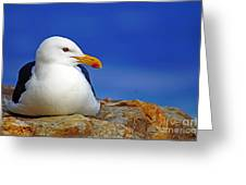 Birds 9 Greeting Card