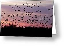 Birds At Sunrise Greeting Card