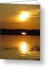 Birds At Sunset Greeting Card
