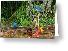 Birds Bathing Greeting Card