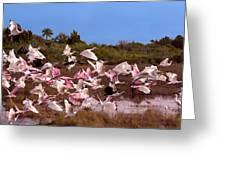 Birds Call To Flight Greeting Card