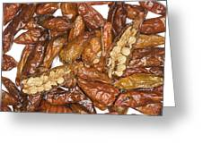 Bird's Eye Chilli Peppers Greeting Card