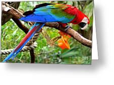 Birds Eye Greeting Card