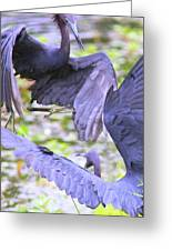 Birds - Fighting - Herons Greeting Card