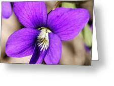 Birds Foot Violet Greeting Card