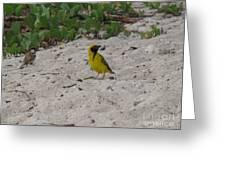 Birds - Ile De La Reunion - Reunion Island Greeting Card by Francoise Leandre