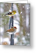 Birds In A Snowstorm Greeting Card