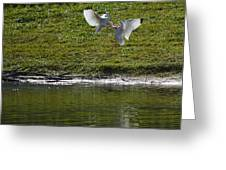 Birds In Fight Greeting Card