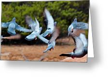 Birds In Flight 030515aa Greeting Card