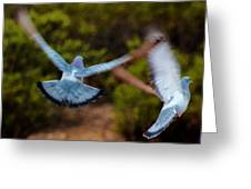 Birds In Flight 030515ab Greeting Card