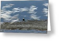 Birds In Flight Greeting Card