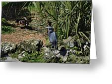 Birds In Florida Greeting Card