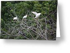 Birds In The Brush Greeting Card