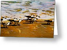 Birds In The Surf Greeting Card