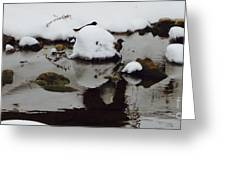 Birds In Winter Water Greeting Card