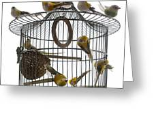 Birds Inside And Outside A Cage Greeting Card