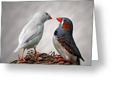 Birds Interacting Greeting Card