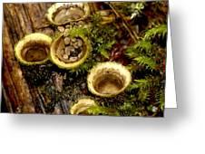 Birds Nest Fungi Greeting Card