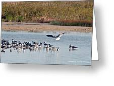 Birds Of Cutler Bay Wetlands 42 Greeting Card