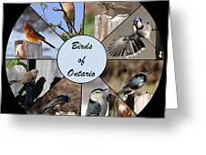 Birds Of Ontario Greeting Card