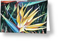 Birds Of Paradise  2   Sold Greeting Card